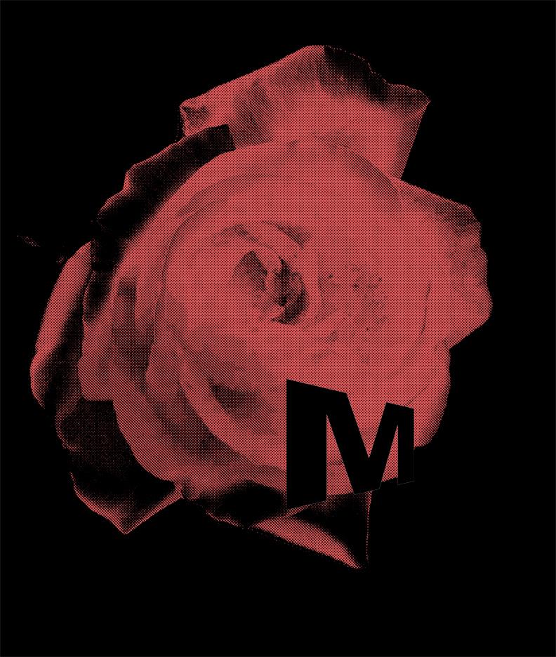 M-rose-72